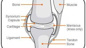 medical-illustration-parts-of-knee-pain-02
